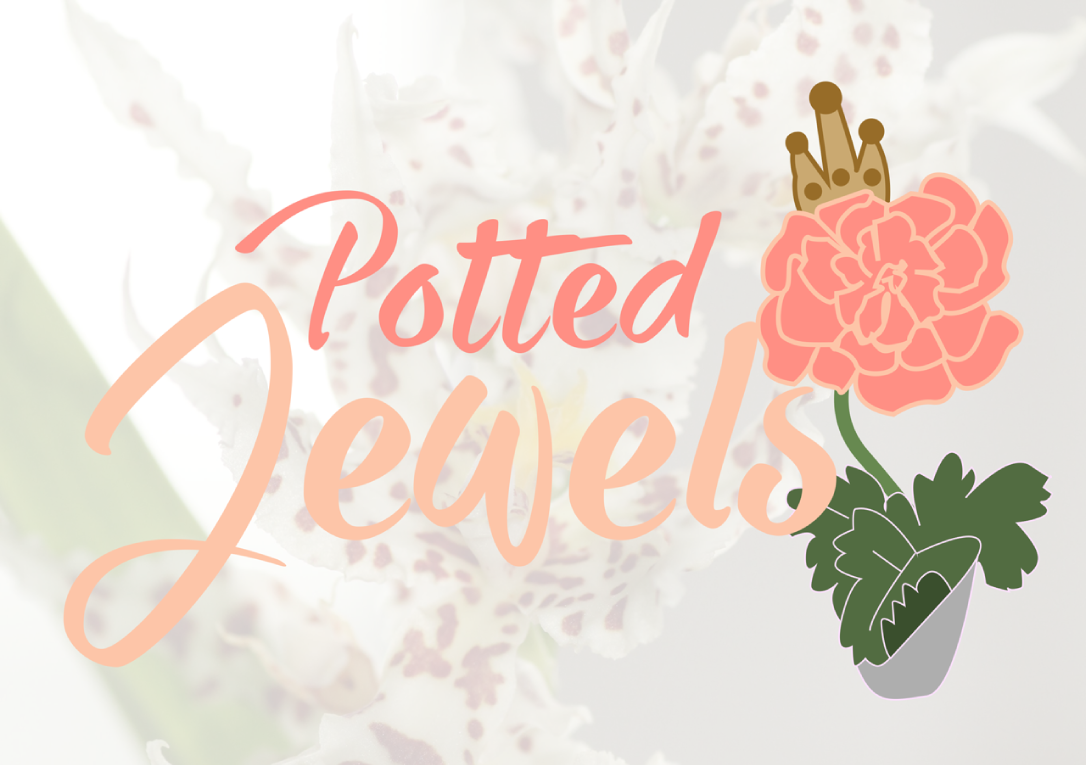 Potted Jewels